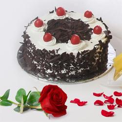 Black Forest cake with Red Rose to Hazira