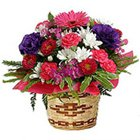 Send Flowers  to Coimbatore.
