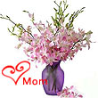 Fresh Orchids in Vase ( Major Cities Only )